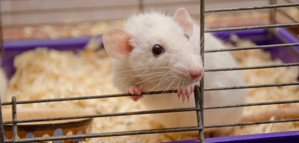 Firdapse Active Ingredient 3,4‐DAP Targets Muscles in Rats, Has Long-Lasting Effect, Study Says