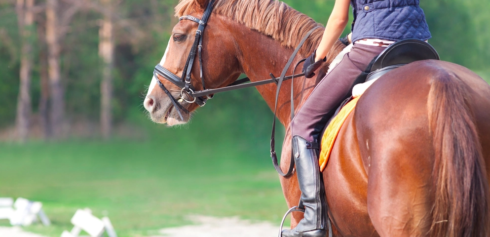 Equine-assisted Activities Have Restored Joy in Our Daughter's Life